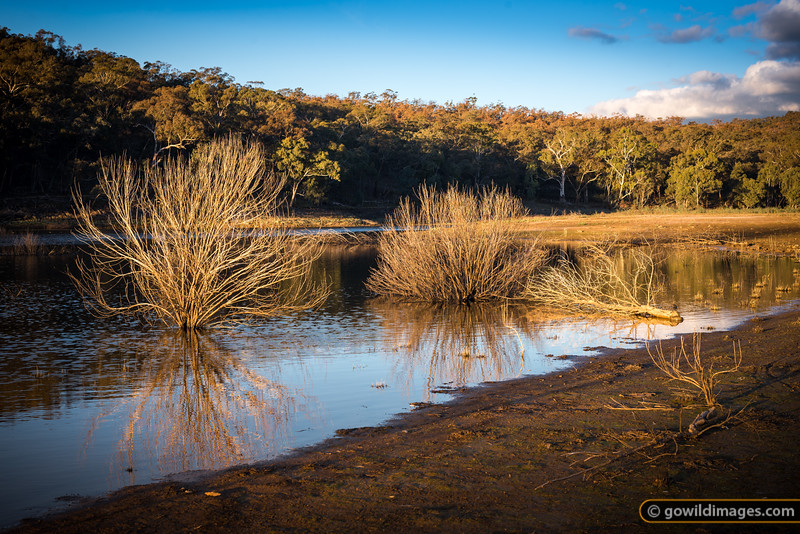 Late afternoon light on Upper Teddington Reservoir, Kara Kara NP (formerly St Arnaud Range NP). [Update] In February 2014, this reservoir was drained of water by thieves.