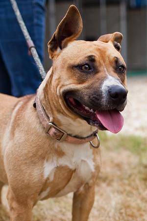 QACAS - Adoptable Pets - May 2013