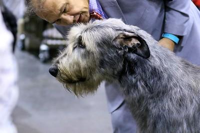 Royal Canin National Championship-Orlando Cluster
