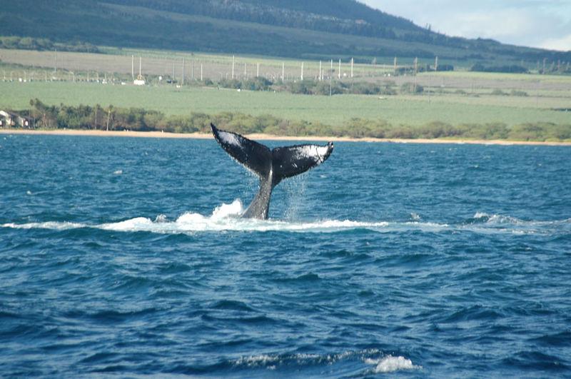 whale tail19.jpg
