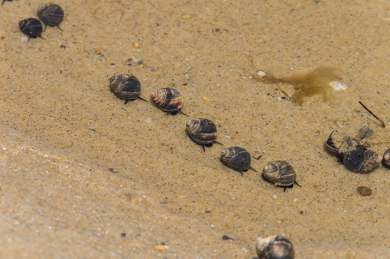 March of the snails