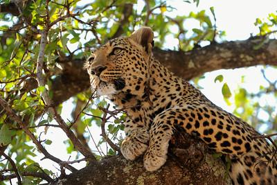 AFRICA  WILDLIFE 8-12