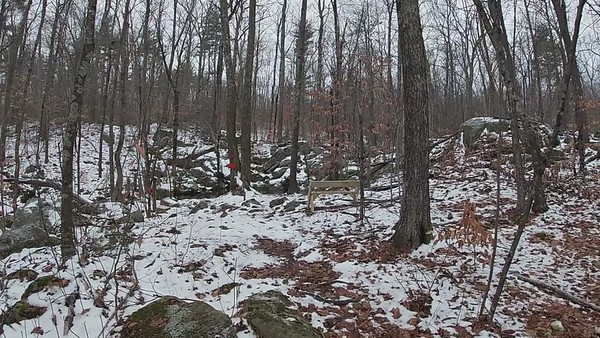 Kingston Town Forests 1-5-2021