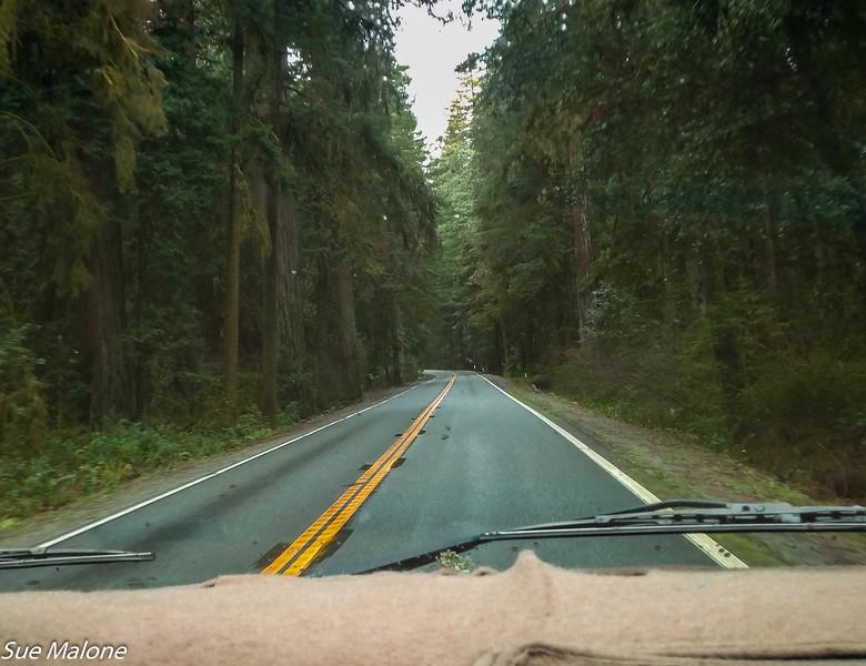 02-13-2021 Redwoods and Coast from Deborah-8.jpg