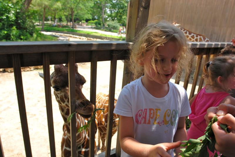 Feeding the giraffes - 3