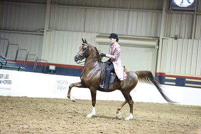 174.Arabian Country English Pls Jr.Horse Championship