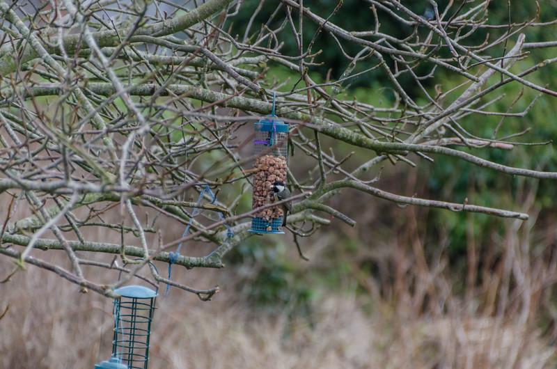 Birds 270118-3.jpg