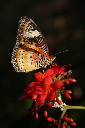 2015-03-07 Butterfly Wonderland