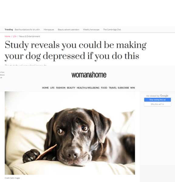 Screenshot_2019-12-12 Study reveals you could be making your dog depressed if you do this.png