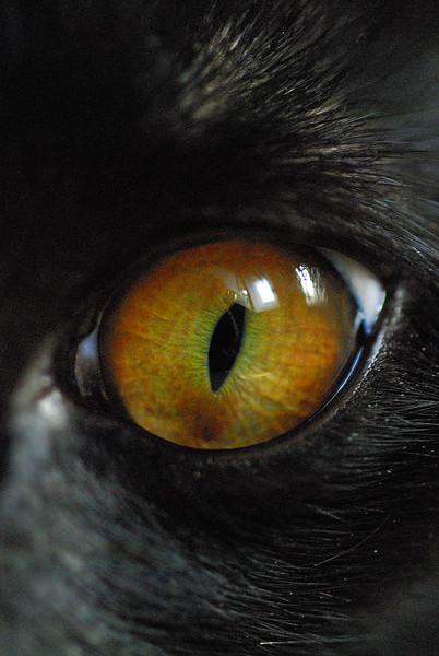 Cat's Eye.jpg