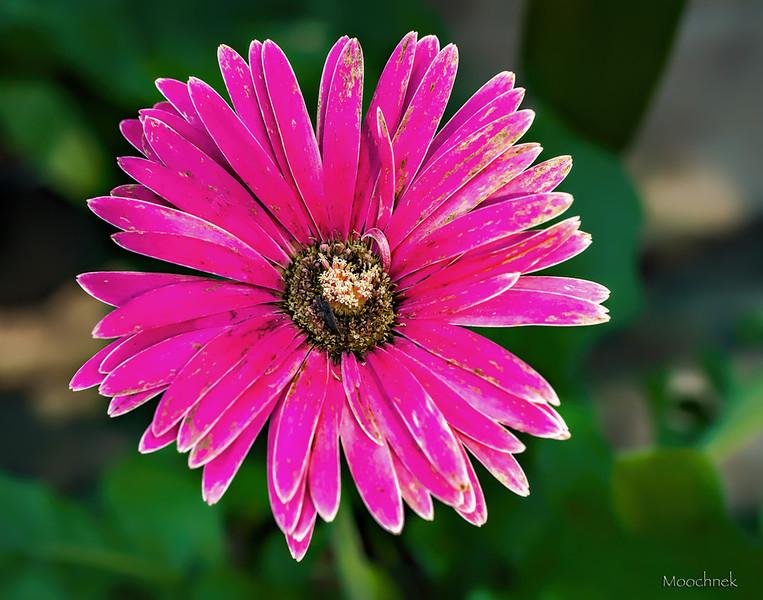 Flowersusf_0020.jpg