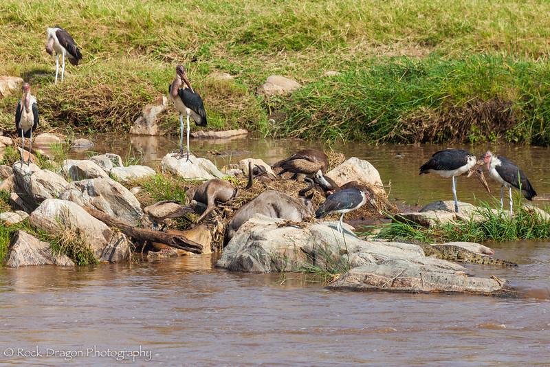 North_Serengeti-84.jpg