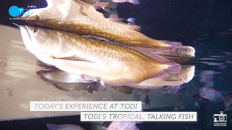 "TODI TODAY: TODI's Tropical, Talking Fish - Season 1, Episode 4: ""Let us all say the Pledge:"""
