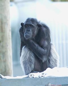 Monkey world -Dorset - 25/10/16