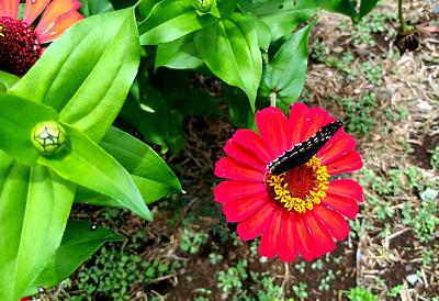 Atenas Flowers