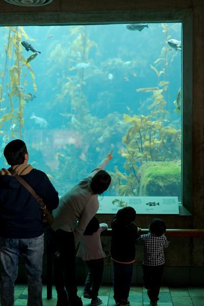 Aquarium Labuguen 2019