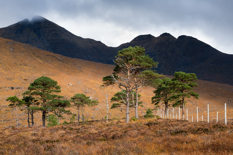 Beinn Alligin Scots Pines