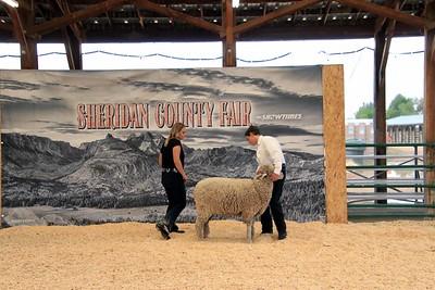 2021 Breeding Sheep