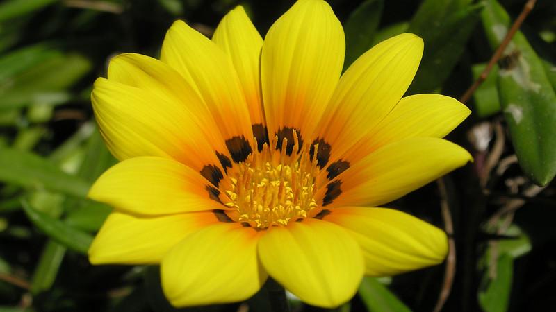 Flowers2 1920x1080 (11).jpg