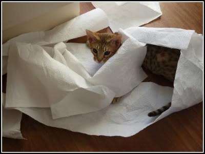paper towel ashia.jpg