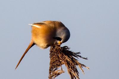 Louwersmeer National Park