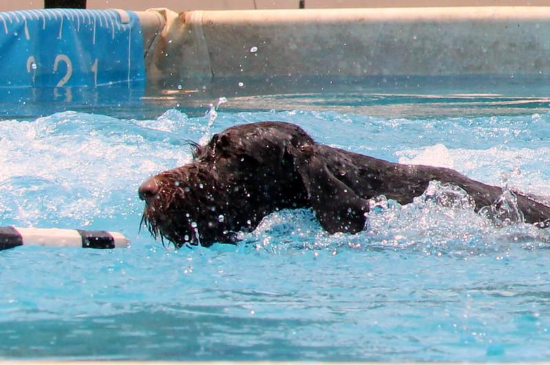 2015.8.6 Winnebago County Fair Dock Dogs (46).JPG