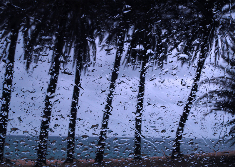 Looking through raindrops on my windshield at palm trees blowing in the wind on a cloudy, windy day at Sunset Beach,   North Shore of O'ahu, Hawai'i