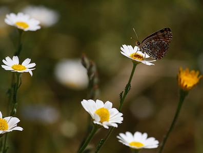 Butterflies Extremadura