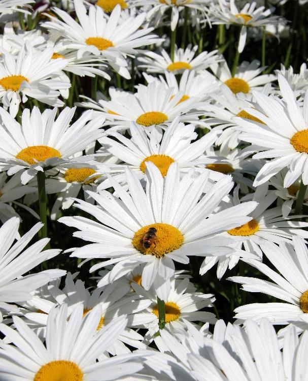 sundayflora828b.jpg