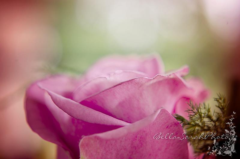pink rose logo.png