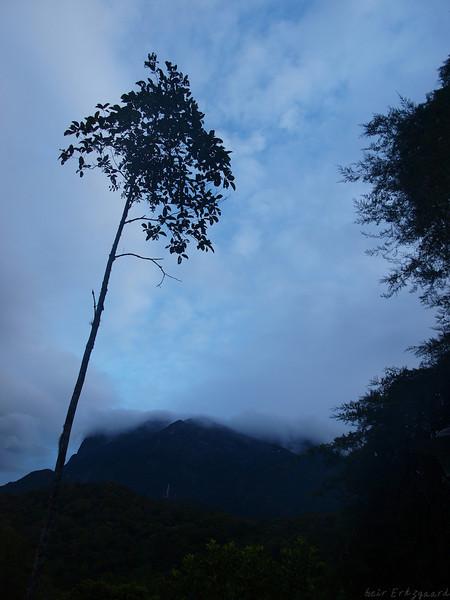Bilder fra Borneo (Foto: GeirI