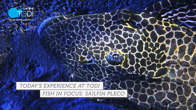 TODI TODAY: Fish in Focus Videos