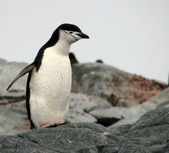 Antarctica - 2008