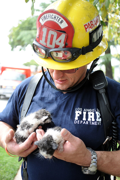 . Firefighter Scott Anderson holds two kittens that were rescued from a buring home in the 17800 block of Vanowen St. in Reseda, CA April 10, 2014.  Six kittens were rescued and taken to a local animal shelter.(Andy Holzman/Los Angeles Daily News)
