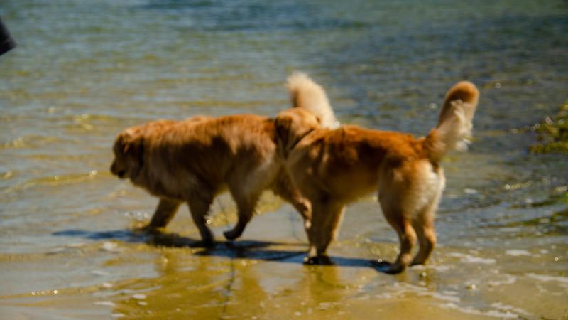 PuppyParty18-122.jpg