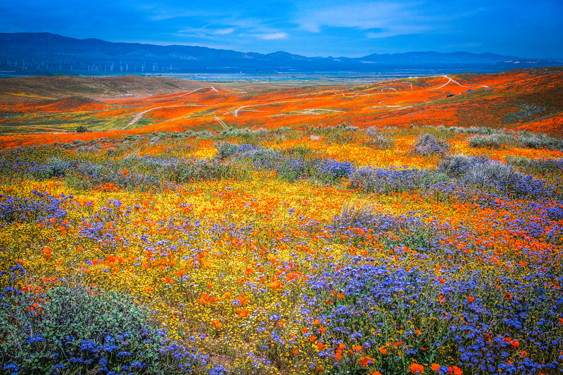 Spring Symphony Antelope Valley Magnum Opus #1: Antelope Valley Poppy Reserve Wildflowers Superbloom Fine Art Landscape Nature Photography: California Fine Art Landscape Nature Photography