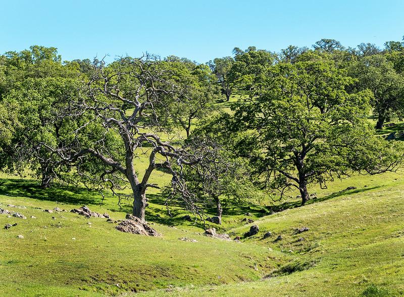 Beale landscape.jpg