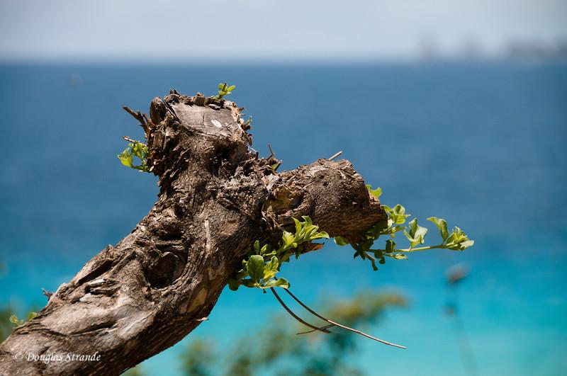 Punta Sur: not dead yet....
