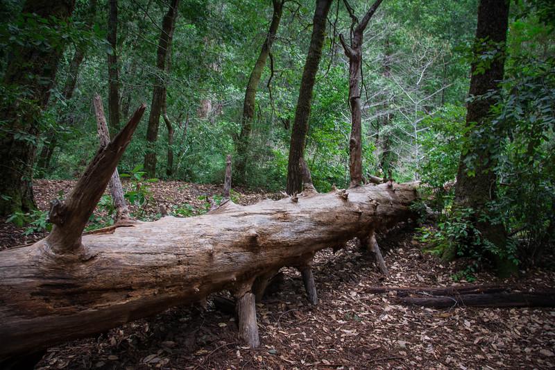 Redwood-62.jpg