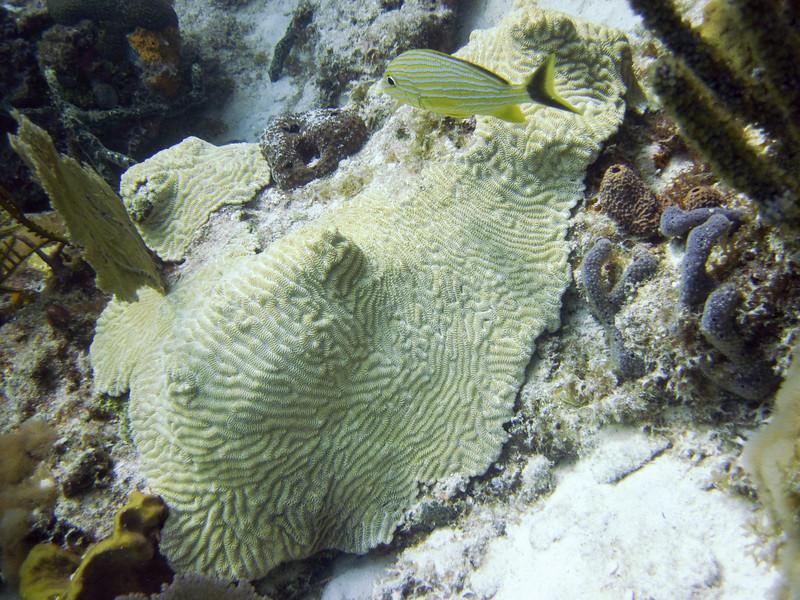 islamorada-diving-54.jpg
