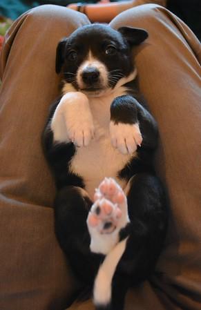 Cootie Pups