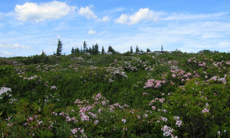 Dolly Sods Wilderness