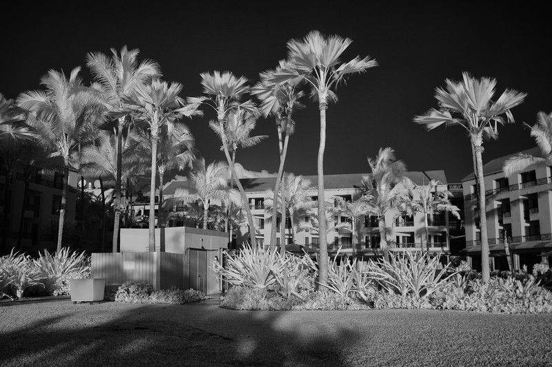 20180131 Marriot Sunrise IR DSC02986-Edit-Edit.jpg