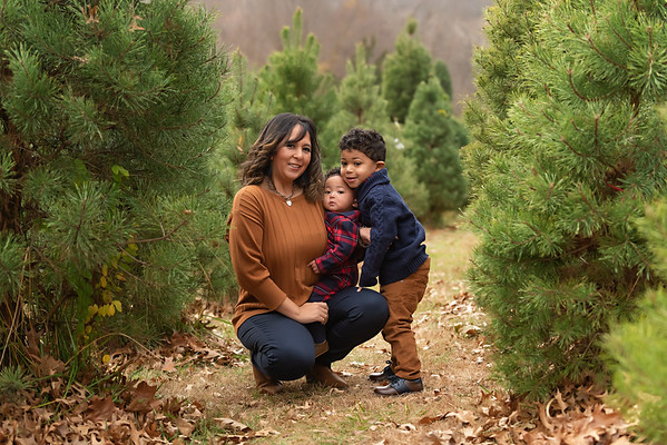 Higgins 2020 Tree Farm