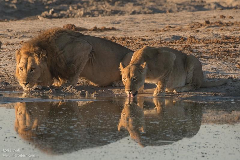 botswana_leo_couple_drinks.jpg