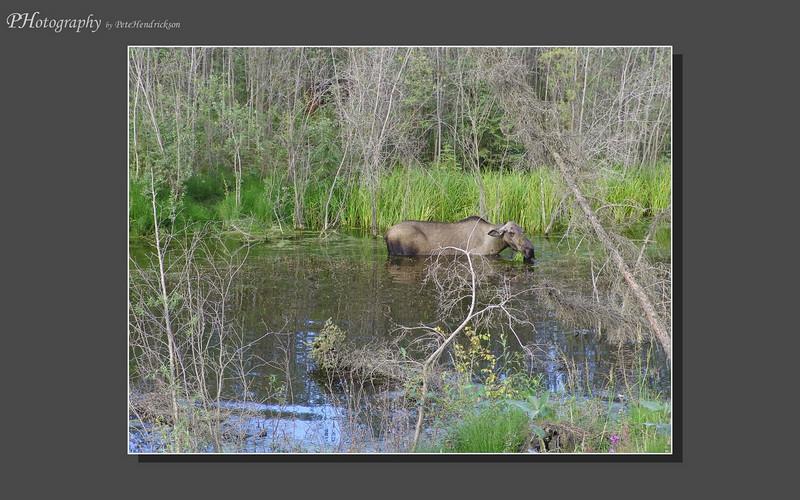 My Alaska 12-08-021.jpg