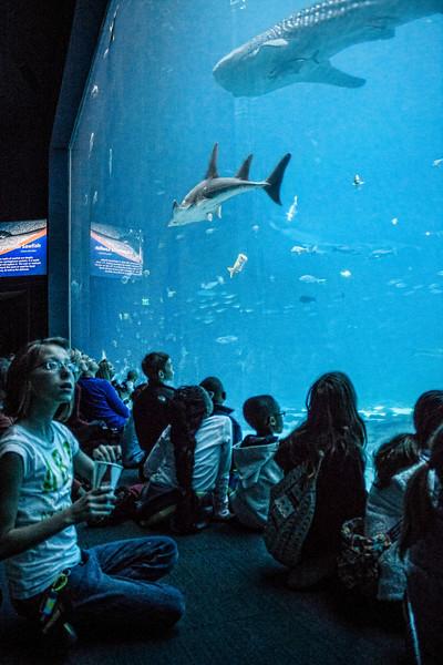 aquarium_0084.jpg