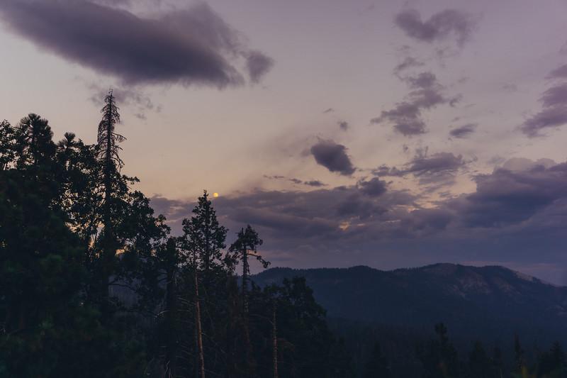 Rui in Sequoia-06997.jpg