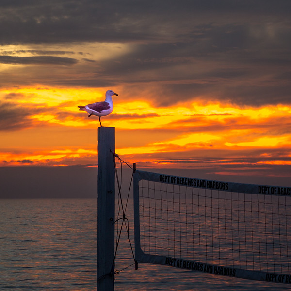 January 28 - Volleyball or dinner?.jpg