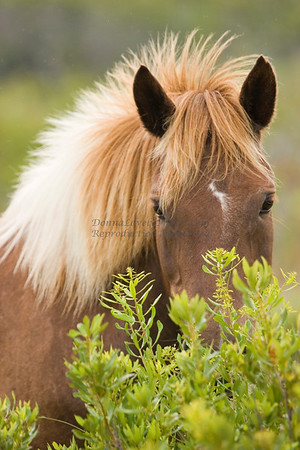 Horses & Horse Related Photos